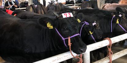 素牛市場情報