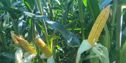 PHF/NON-GMOの取り組み
