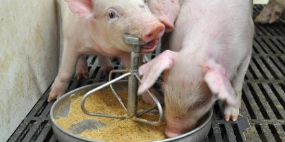 豚用飼料(混合飼料・人工乳・代用乳)